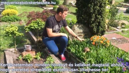 temetőbe való növények Megyeri kertészet